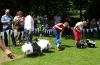 Sheepy IGs in the Fancy Dress