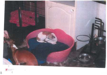 Illegal Italian Greyhound breeder prosecuted & banned for life by